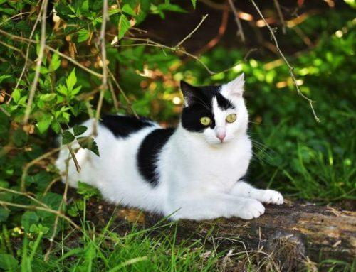 开心一刻,被驯化的猫咪好可爱!