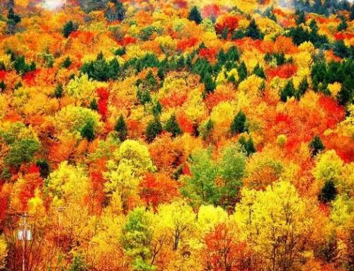 """深秋不去后悔的2大景点,不仅是旅游胜地,还是最美""""摄影天堂!"""